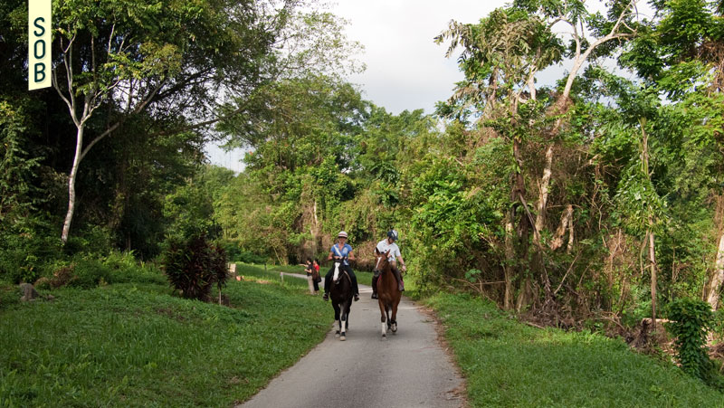 Horse riding through Bukit Brown Cemetary