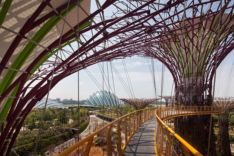 Supertree aerial walkway at Gardens by the Bay Singapore