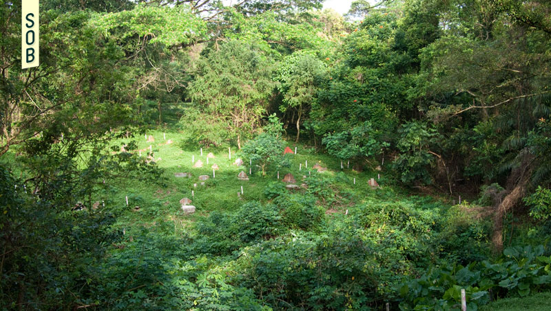Bukit Brown tombs marked for exhumation
