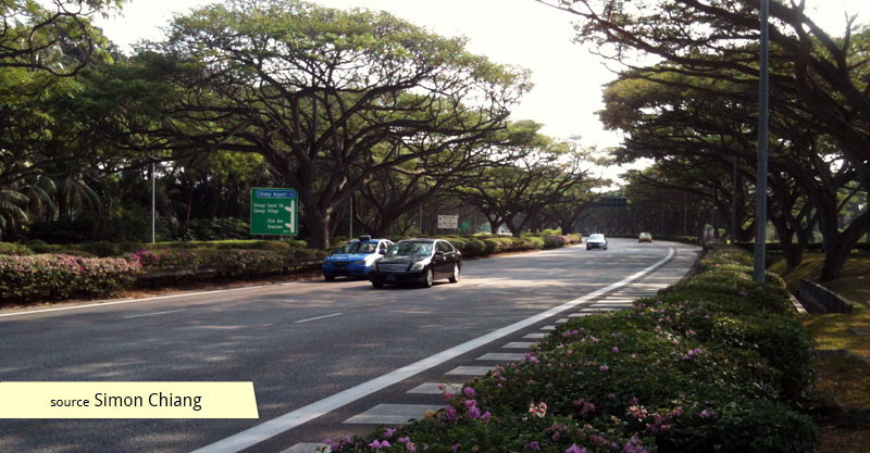 Rain tree tunnel of East Coast Parkway ECP