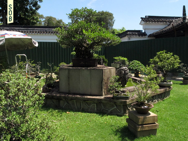 Bonsai garden at Japanese Gardens Jurong